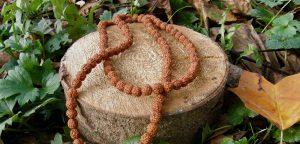 Rudraksha: Posvátná semínka a slzy boha Shivy