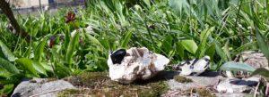 Čištění a nabíjení kamenů – část 12. Křišťál s turmalínem