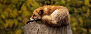 Snít či bdít aneb význam spánku v našem životě